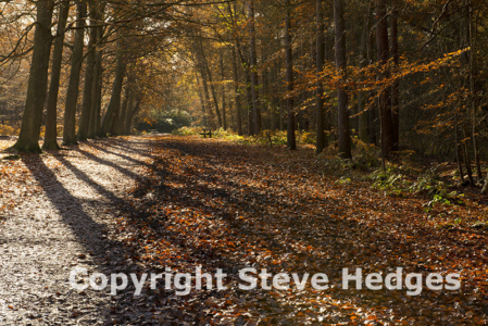 Autumn Forest Photography from Steve Hedges in Essex