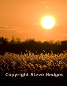Backlit Reeds Photography from Steve Hedges in Essex