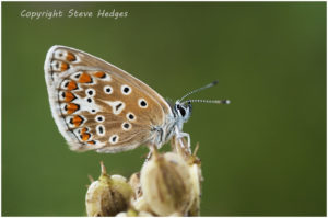 close up butterfly brown