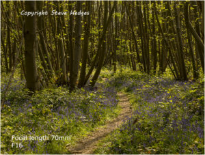 bluebells 70mm