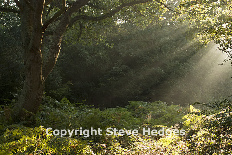 Essex Forest Photography from Steve Hedges in Essex