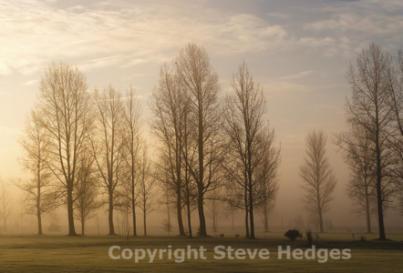 Misty Morning Photography from Steve Hedges in Essex