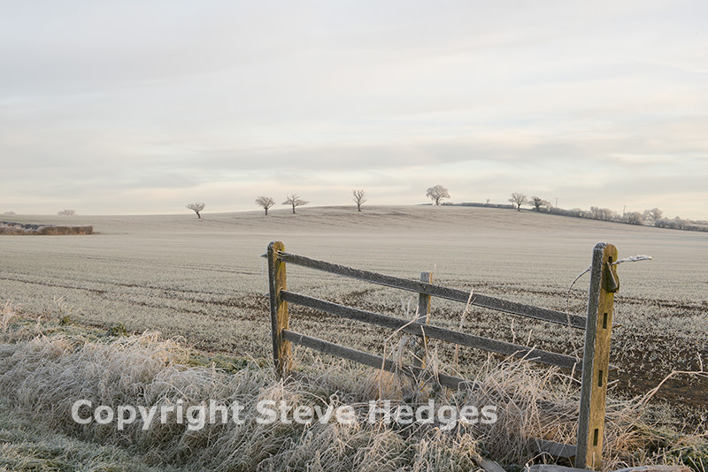 Frosty Morning Photography from Steve Hedges in Essex