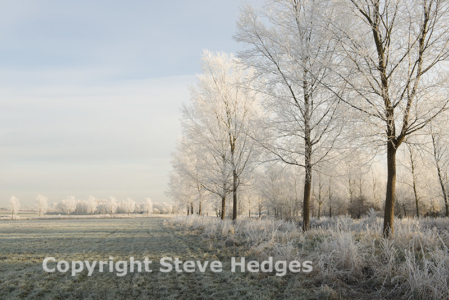 Frosty Trees Photography from Steve Hedges in Essex