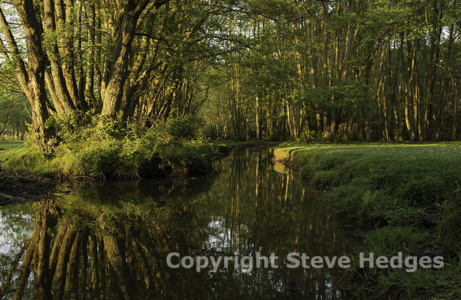 New Forest Photography from Steve Hedges