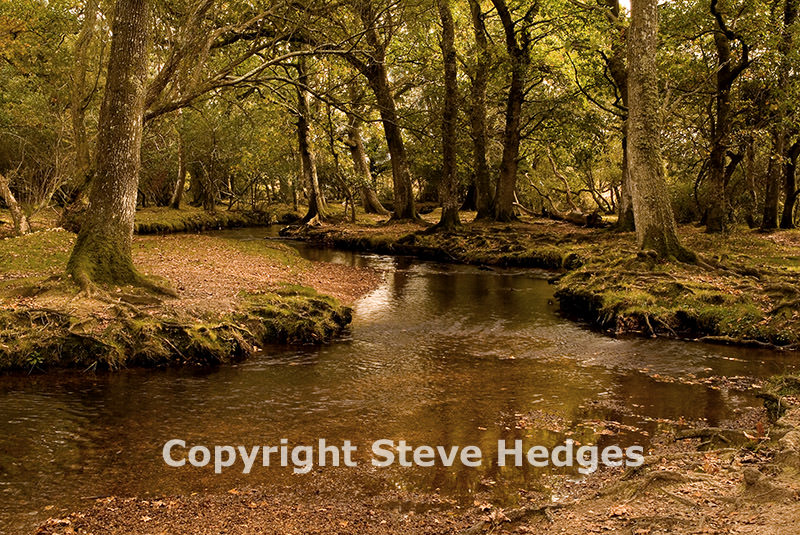 New Forest Photography from Steve Hedges in Essex
