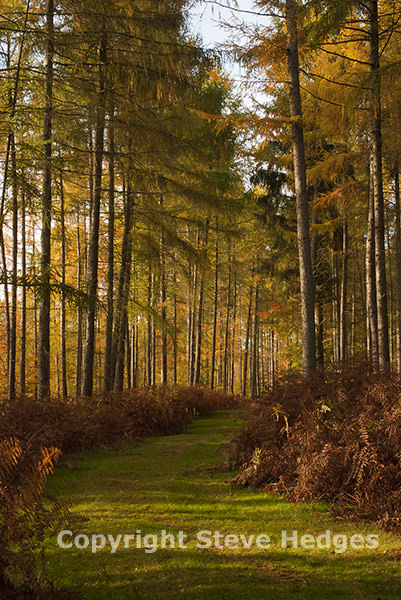 New Forest Photography in Autumn from Steve Hedges in Essex