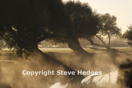 Richmond Park Misty Morning Photography from Steve Hedges in Essex