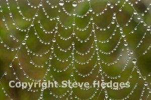 Spiders web Close Up by Steve Hedges