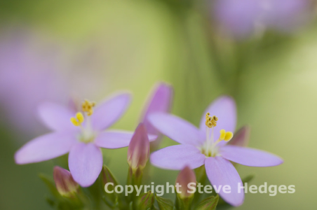 Wild Flower Photography from Steve Hedges in Essex