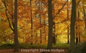 Steve Hedges Intermediate Photography Course in Essex