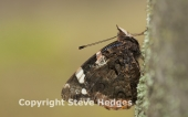 Butterfly Photography Courses in Flatford Mill, Suffolk